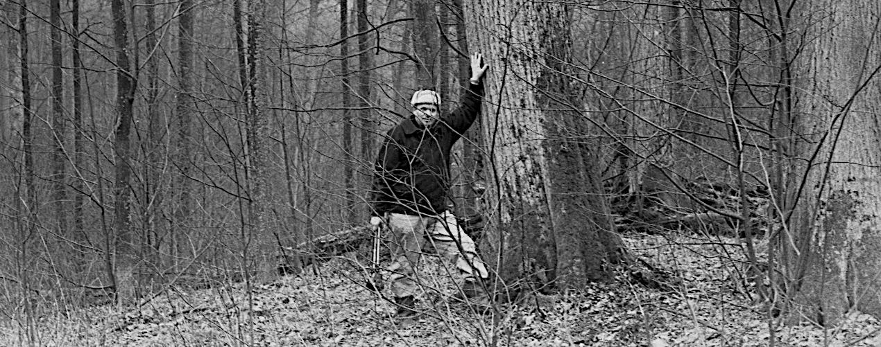 Et træ vælges ved Mynary i Kisielwo-skoven, Polen.