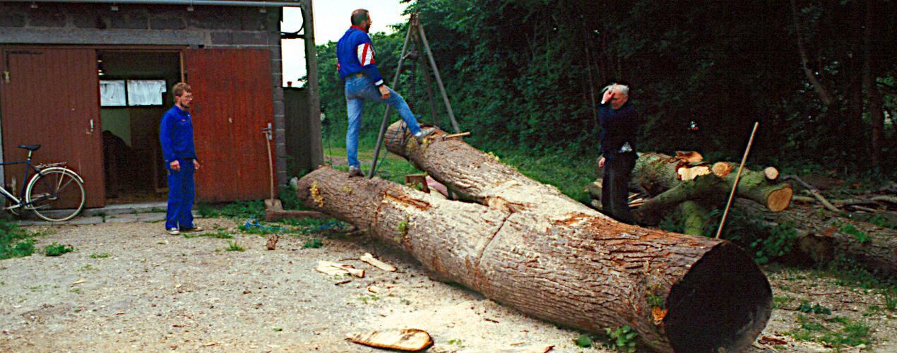 Et dansk lindetræ til brug for en stævnklods.